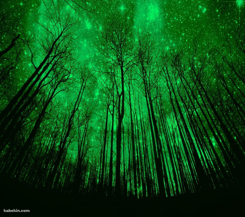 緑の森のandroid壁紙 1440 X 1280 壁紙キングダム スマホ版