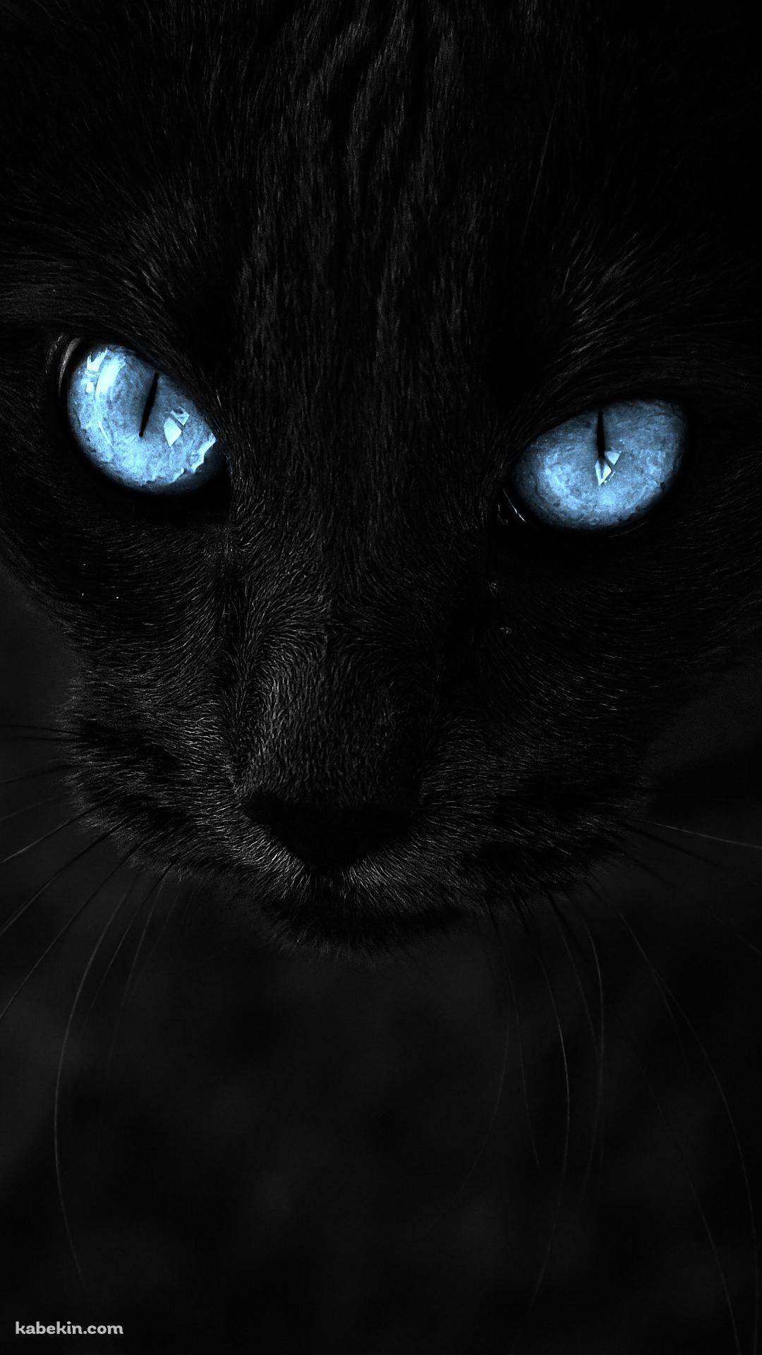 青い目の黒猫のandroid壁紙 1080 X 19 壁紙キングダム スマホ版