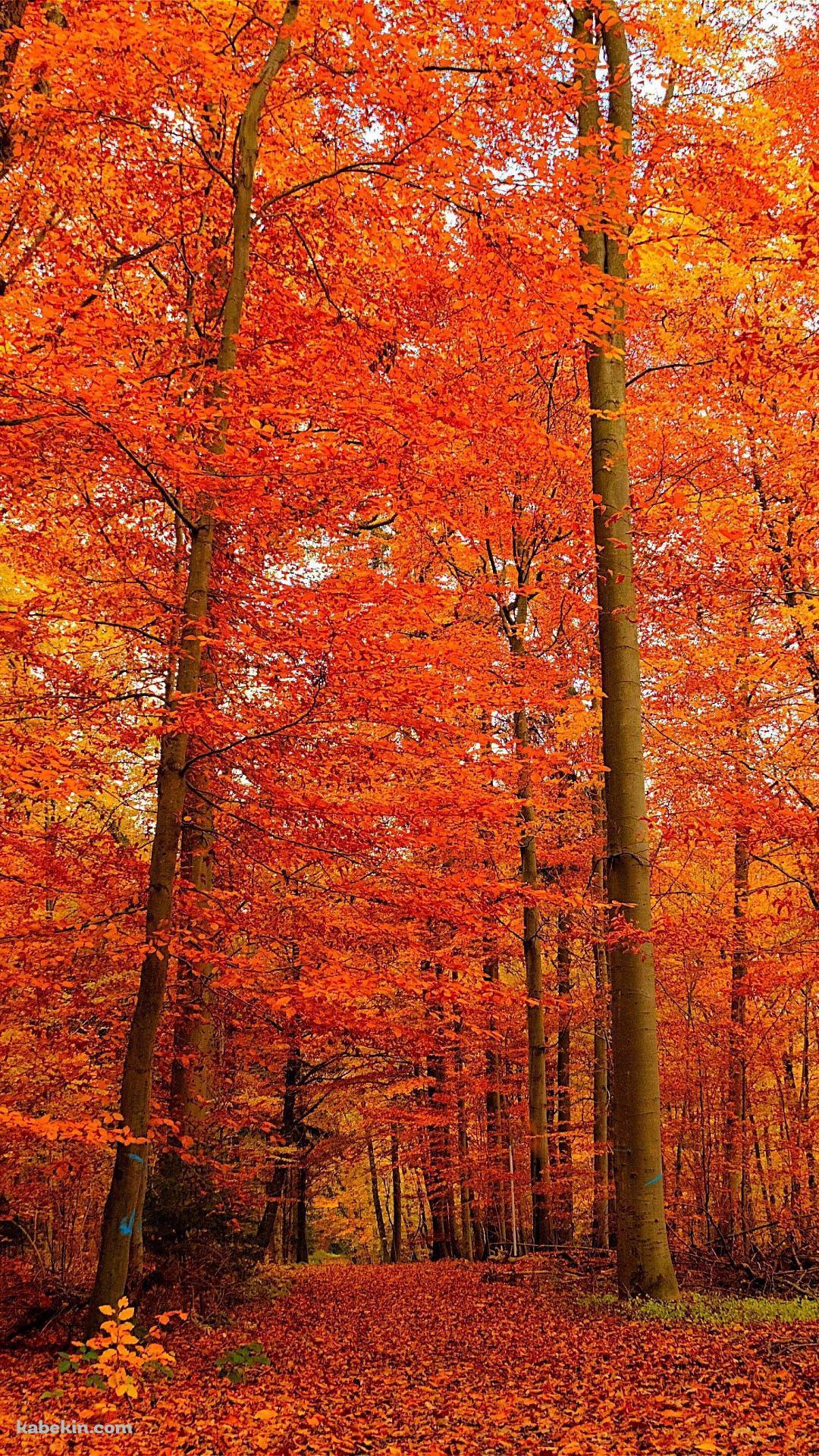 秋の森のandroid壁紙 1080 X 1920 壁紙キングダム スマホ版