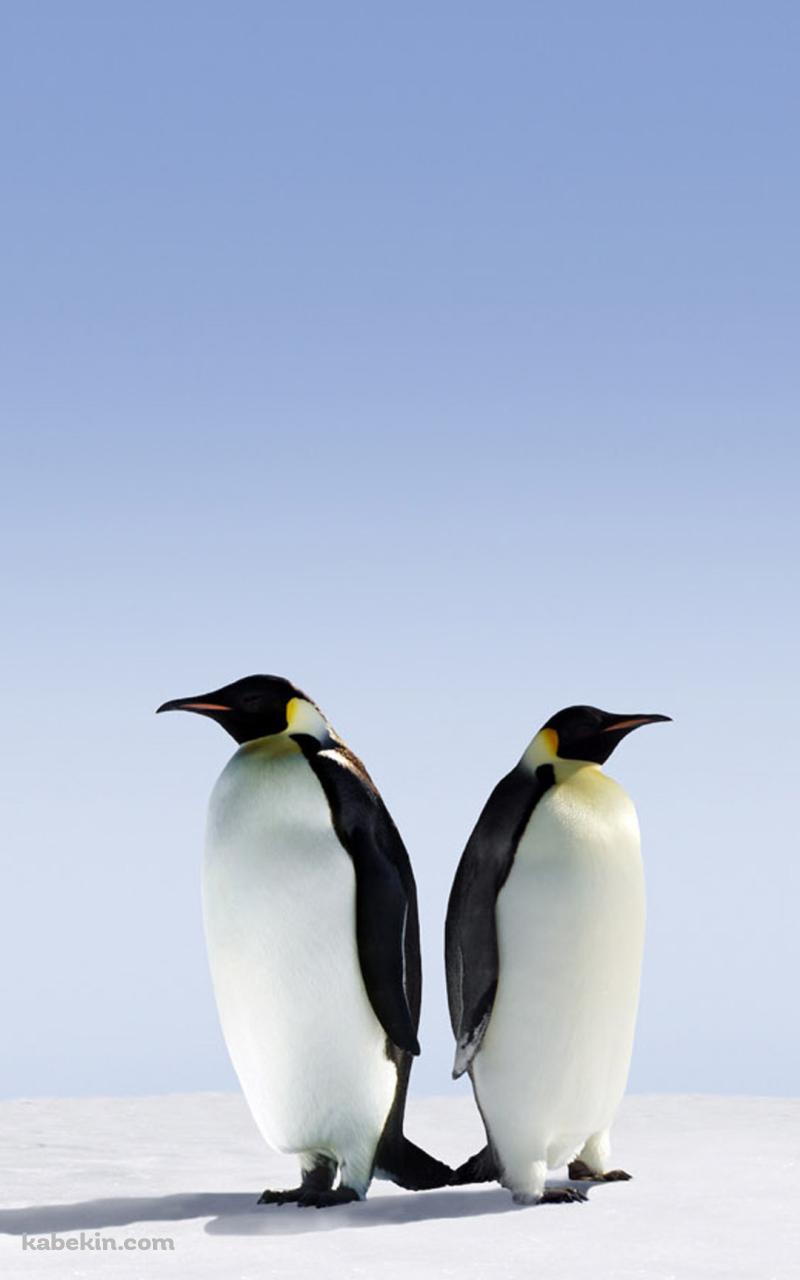 2匹の皇帝ペンギンのandroid壁紙 800 X 1280 壁紙キングダム スマホ版