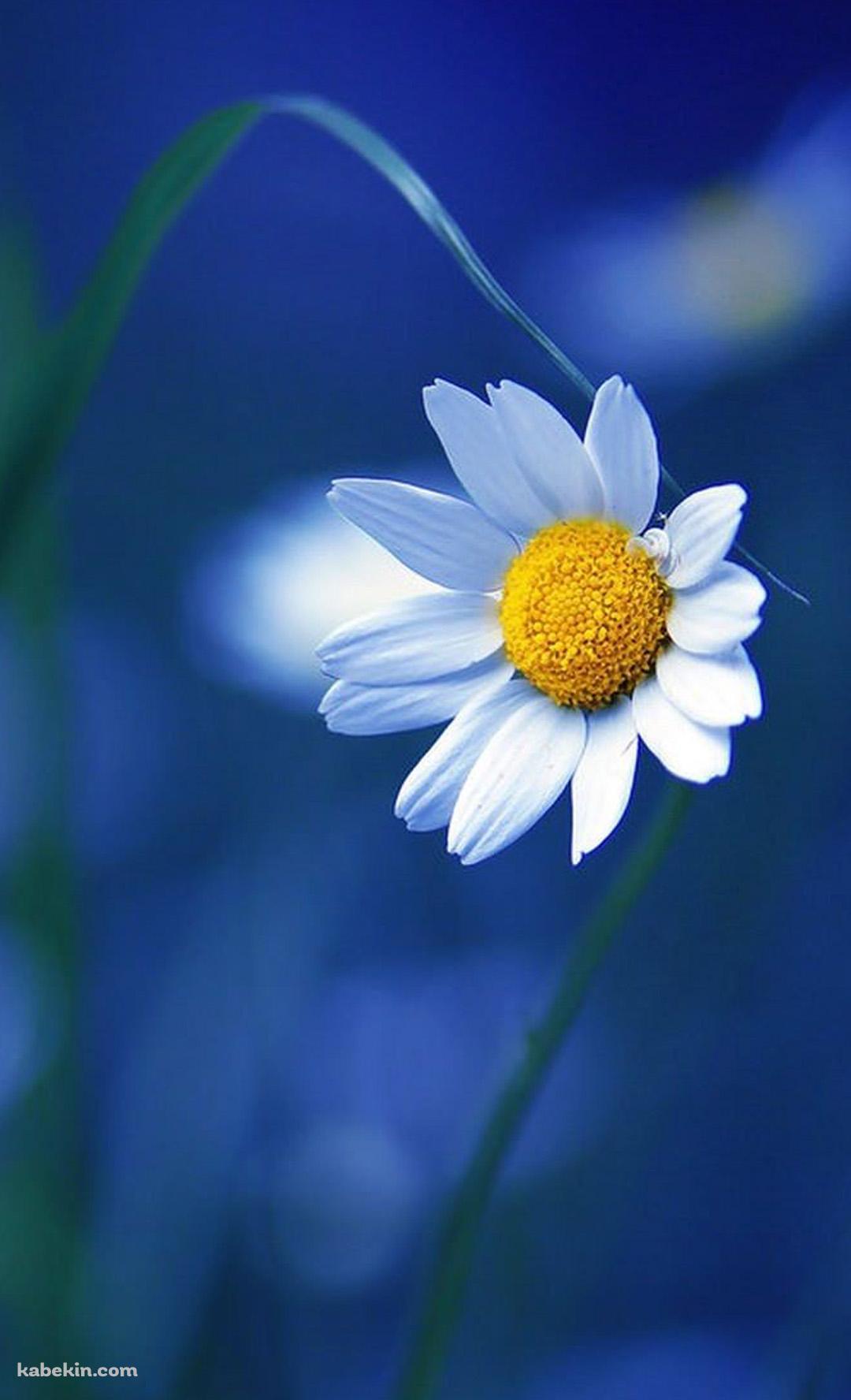 かわいい白の花のandroid壁紙 1080 X 1776 壁紙キングダム スマホ版