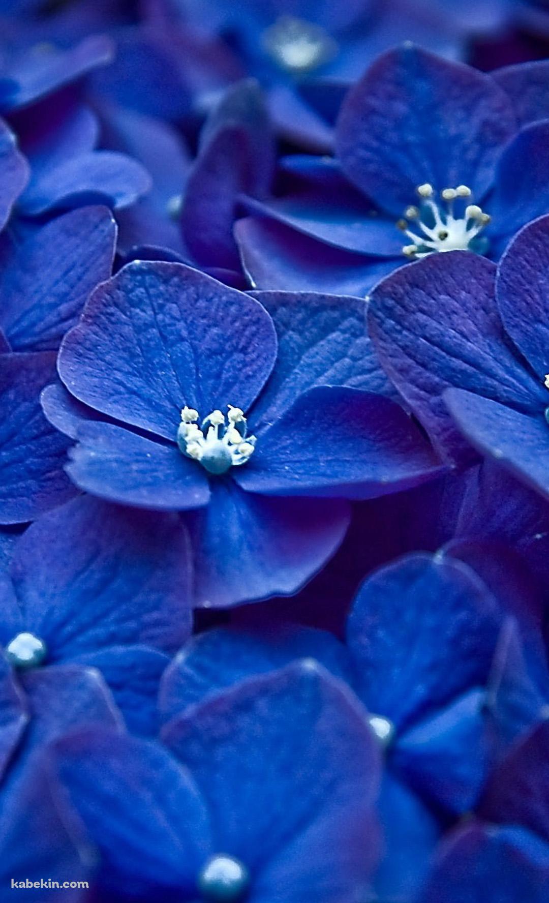 紫 綺麗な花のandroid壁紙 1080 X 1776 壁紙キングダム スマホ版