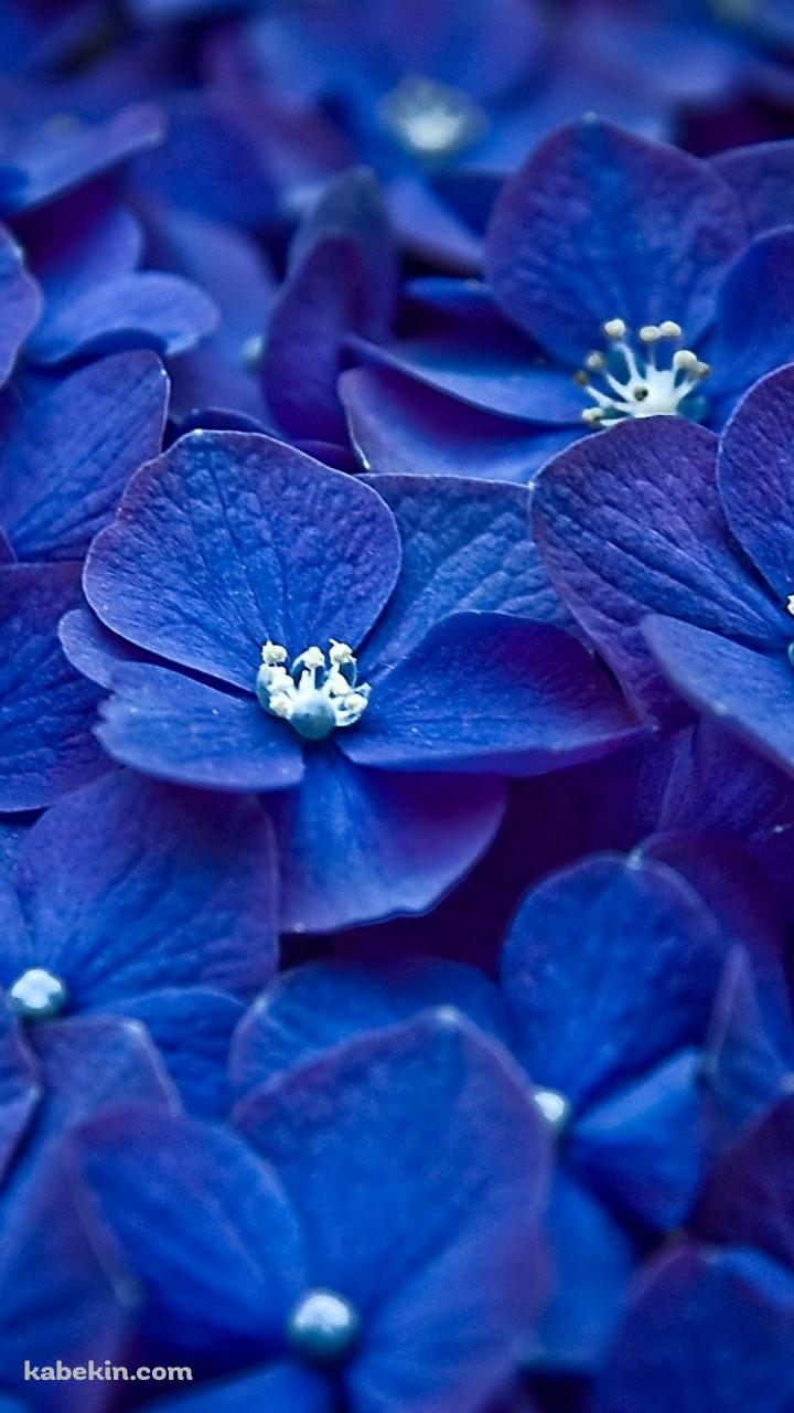 紫 綺麗な花のandroid壁紙 7 X 1280 壁紙キングダム スマホ版