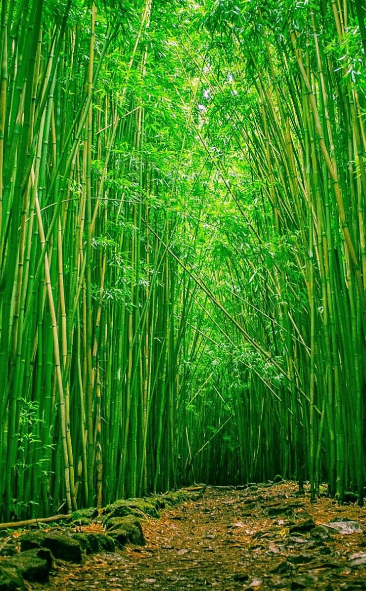 竹生える森のiphone4壁紙 壁紙キングダム スマホ版