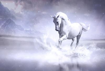 白馬」の検索結果 - Yahoo!検索...