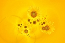 sunflowerの壁紙