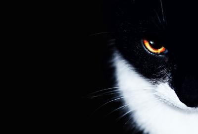 オレンジの眼をした黒猫の壁紙