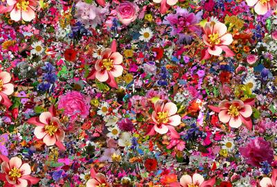 いっぱいの花の壁紙 壁紙キングダム Pc デスクトップ用
