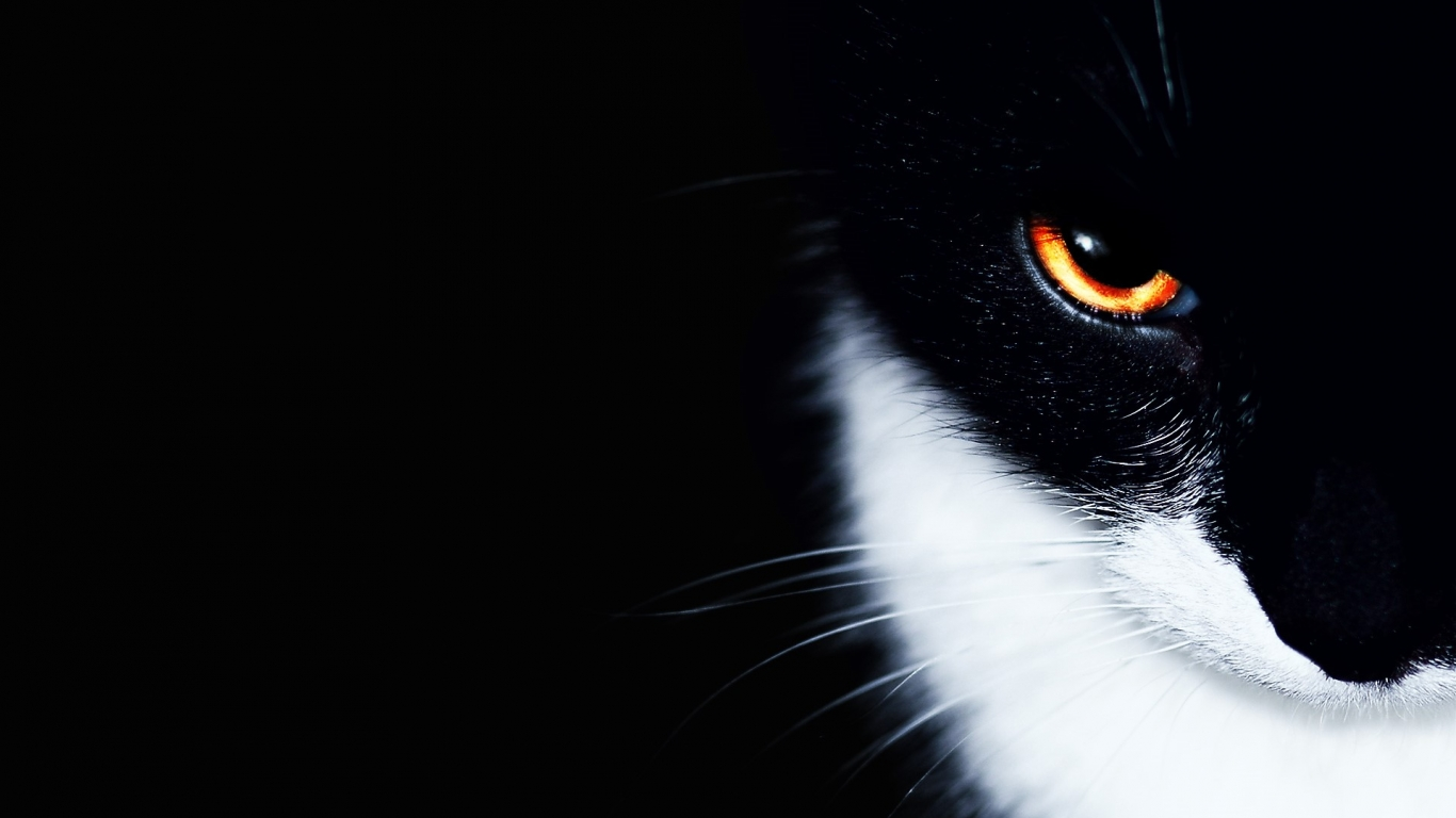 オレンジの眼をした黒猫 1366 X 768 の壁紙 壁紙キングダム Pc デスクトップ版